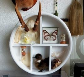 Curio Cabinet met inhoud: Eendje - Gewei - Vlinder & nog veel meer - Free Shipping!