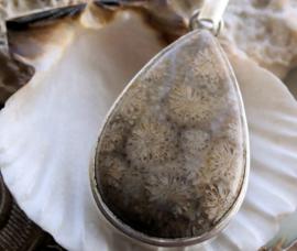 Mooie Hanger: Fossiel Koraal - Verzilverd - 57 mm