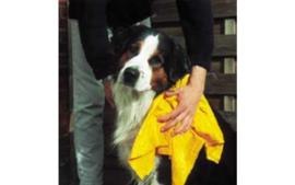 Droogdoek voor de Hond 60x45 cm