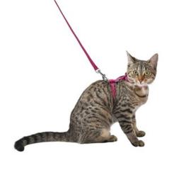 Kittenharnas met riem Safe diverse kleuren