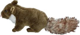Wild Life Dog Marten