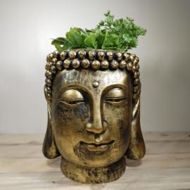 Boeddha kop plantenbak - Goud beeld