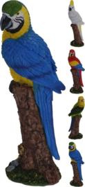 Dierenbeeldje ara papegaaitje vogel 24 cm polystone