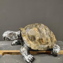 Schildpad beeld 42cm