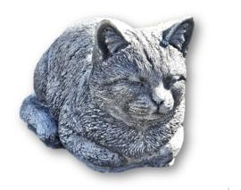 Kat liggend beton