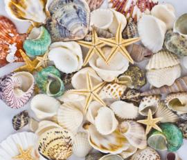 120 Stuks Gemengde Oceaan Zee Schelpen - Zee Sterren - Mix
