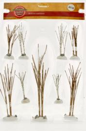 Birch Tree Assortiment