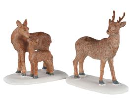 Deer Family - NEW 2020