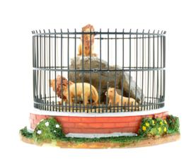 Lion Cage