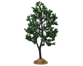 Alder Tree