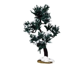 Winter Mulberry Tree, Large