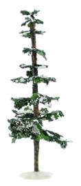 12'' Snowy Cedar