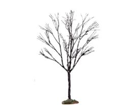 Butternut Tree, Small