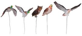 Assorted Birds, Set Of 5