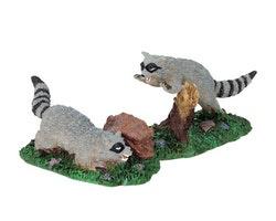 Rabid Racoons