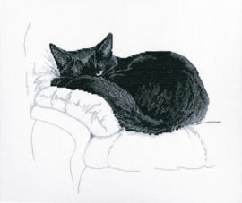 RTO Among Black Cats M668