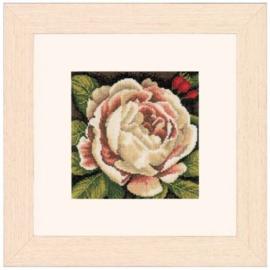 White Rose Telpakket Aida Lanarte