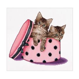 Kitten Twins Aida Thea Gouverneur Telpakket