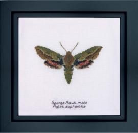 Spurge Hawk Moth Borduurpakket Aida  Thea Gouverneur
