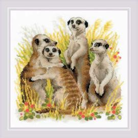 Meerkats Aida Riolis Telpakket