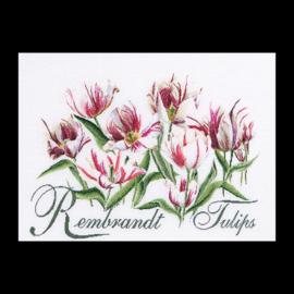 Rembrandt Tulips Aida Telpakket Thea Gouverneur