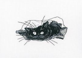 RTO Among Black Cats M667