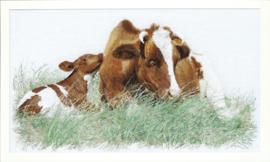 Rode koeien Aida Telpakket Thea Gouverneur