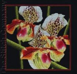 Orchids Aida Borduurpakket RTO M263
