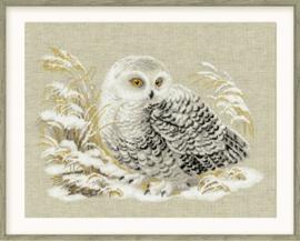 White Owl Aida Riolis Telpakket