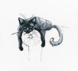 RTO Among Black Cats M666