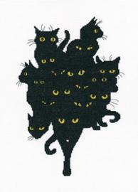 RTO Among Black Cats M670