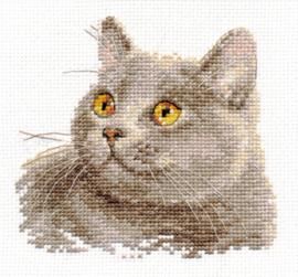 Alisa British cat