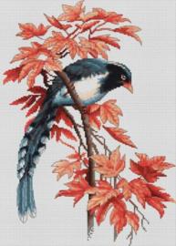 Birdie Aida telpakket - Luca-S