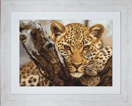 Leopard Aida Telpakket Luca-S