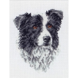 Border Collie Aida Telpakket Anchor