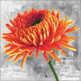 Orange Dahlia Voorbedrukt Borduurpakket Needleart World