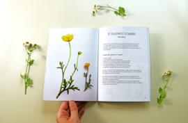 Veldgids Natuur Illustratie - Rianne Kleine Dingen