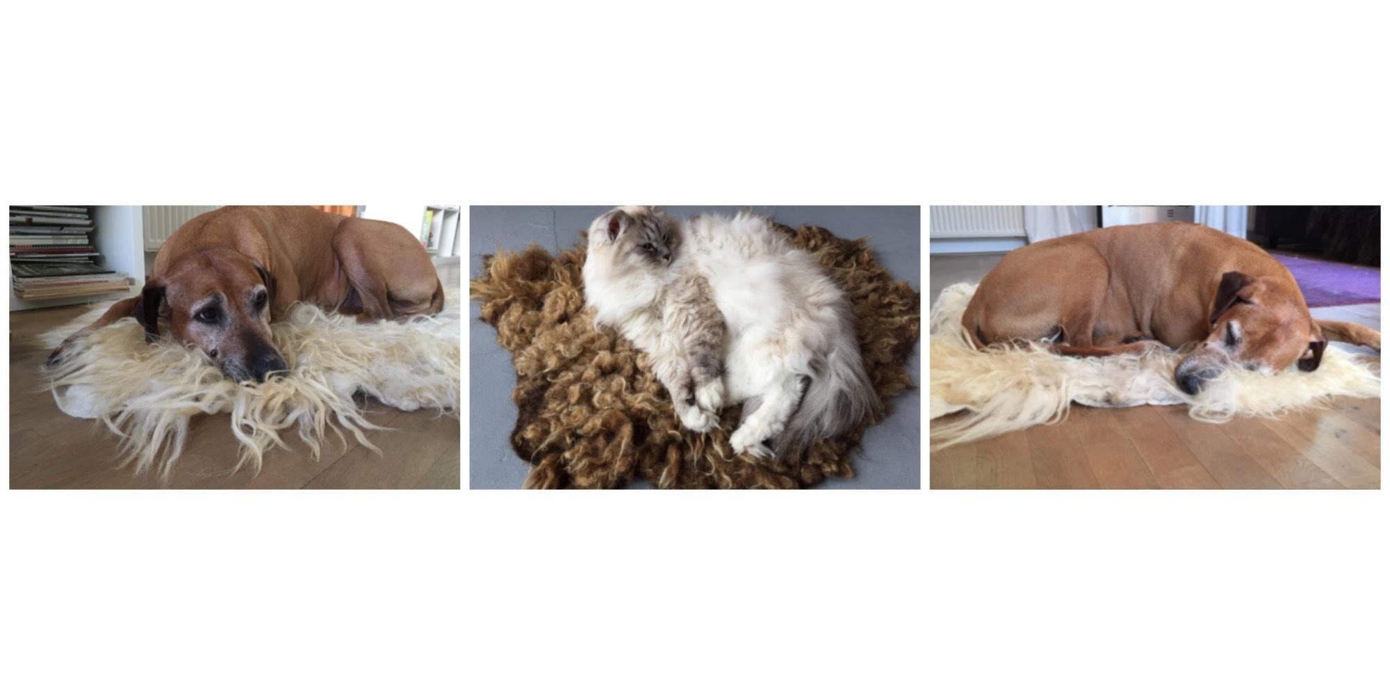 Hond kat Vachtvilten vacht vilt pet bed kleed