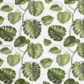 B: Groen-wit bladeren