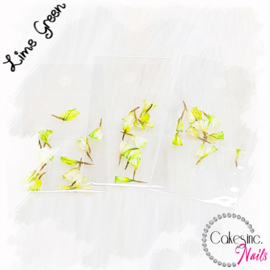 Dream Flowers - Lime Green