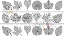 Queen of Decals - Single Skeleton Leaves