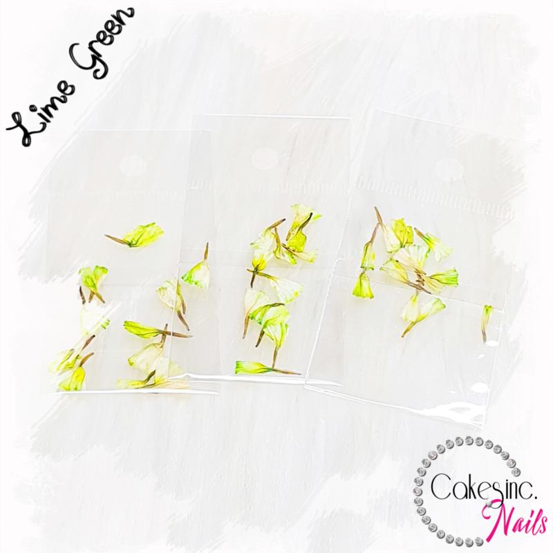 Dream Flowers - Lime Green