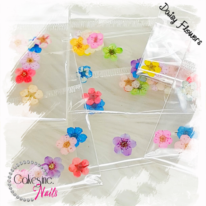 Daisy Flowers - Mixed Pack II