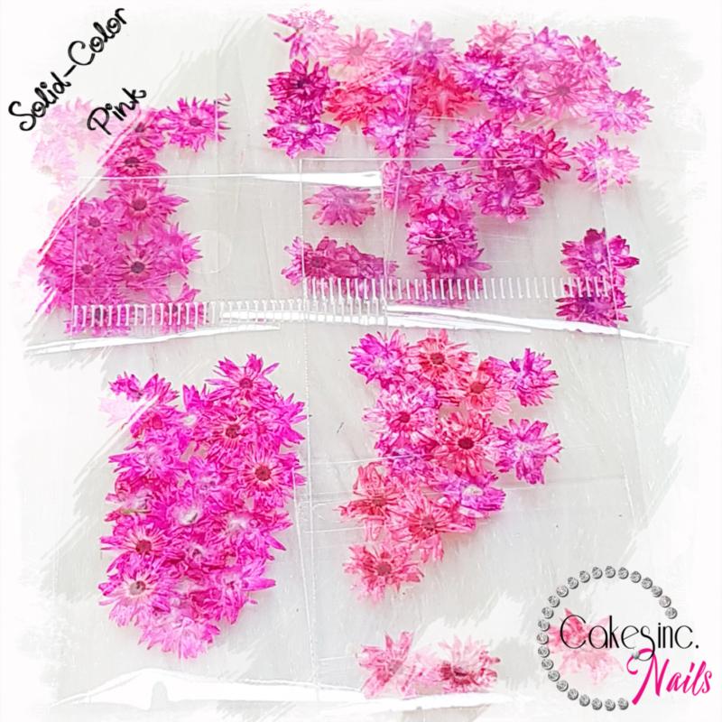 Winter Flowers - Pink