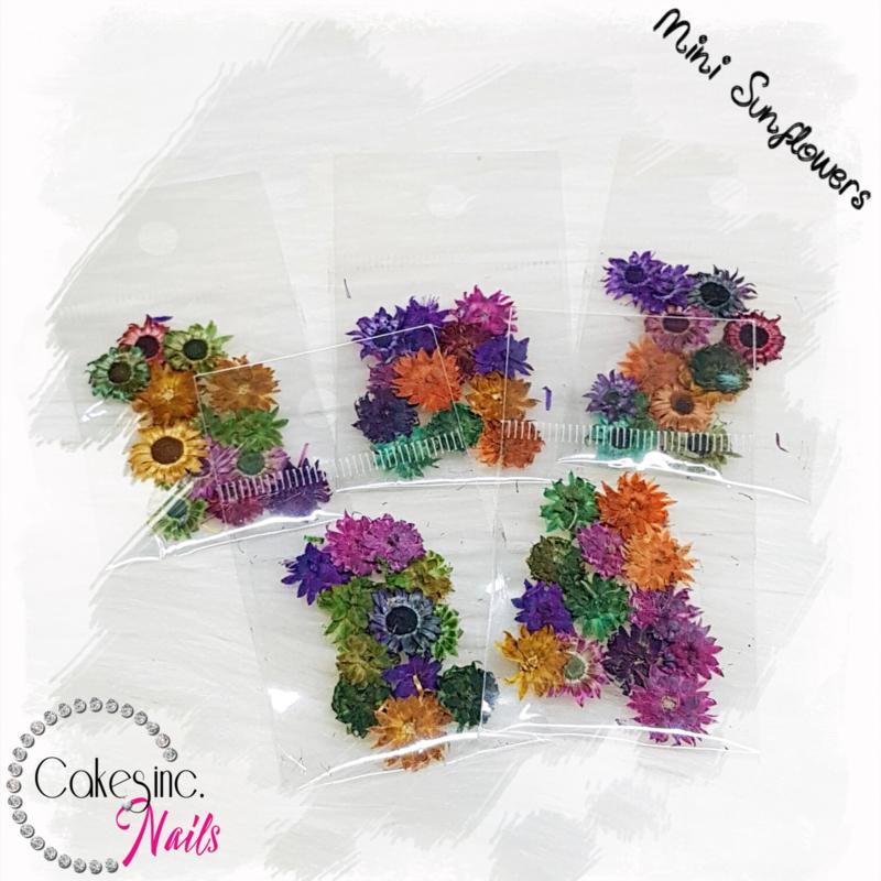 Mini Sunflowers - Mixed Pack