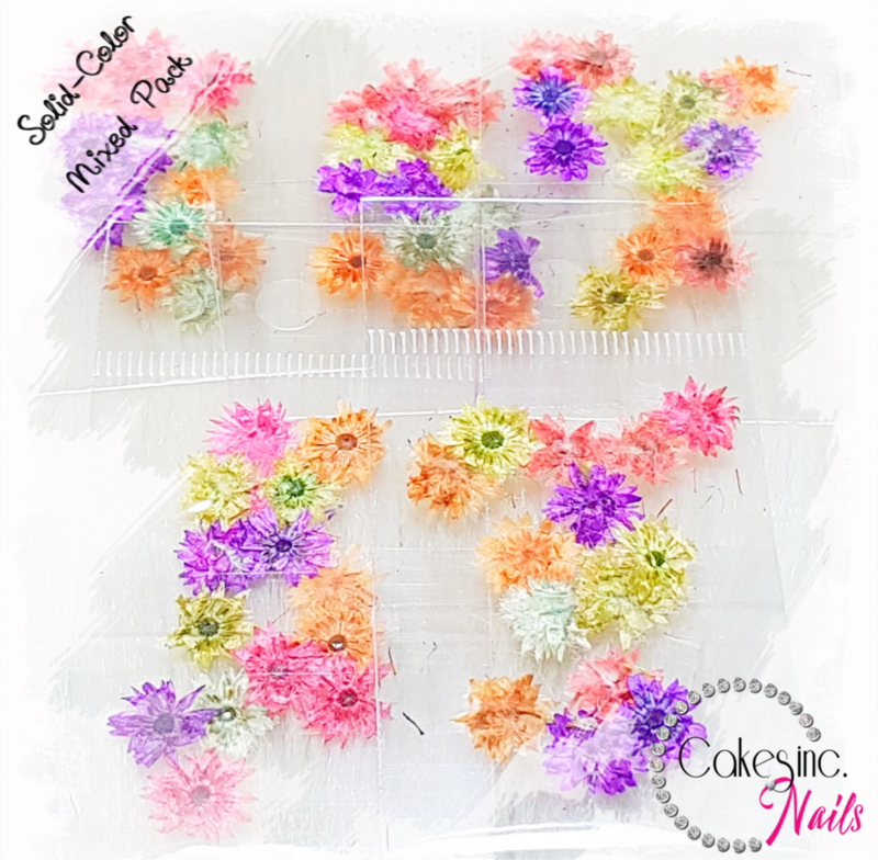 Winter Flowers - Mixed Pack