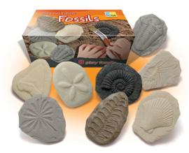 Fossielen ontdekkingsset (set van 8 stenen)
