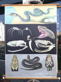 Vintage school poster snake
