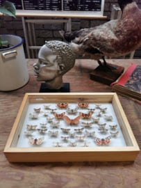 vintage butterfly display case
