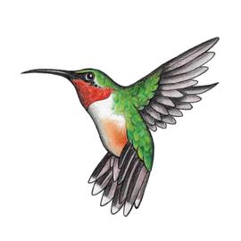 'Kolibri'